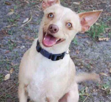 C.A.R.E. Critter Adoption & Rescue Effort, Inc.