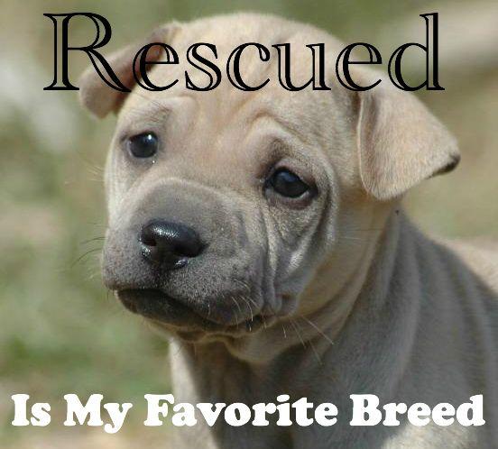 SHELTER DOGS MAKE THE BEST FRIENDS | SpokesDog