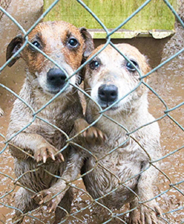 2 million puppies are sold in puppy mills each year while 3 million dogs are euthanized.   We need to change this!