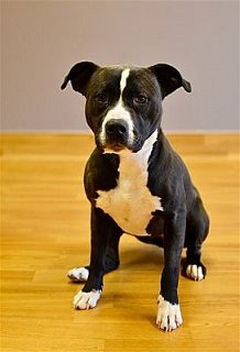 Please help us get Nova adopted by sharing this post.  The more people that know the better chance of finding a new home.